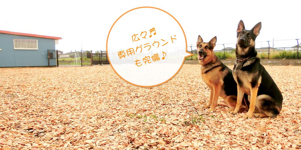 犬のしつけ教室 ドッグスクールのトレーニング風景